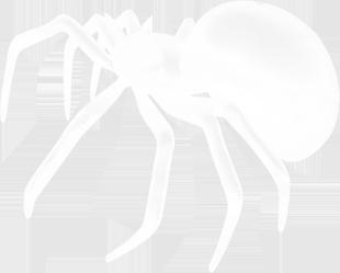 spider-00